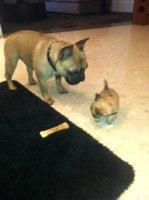 Max and Wilson!.jpg