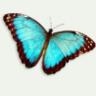 bluefloral